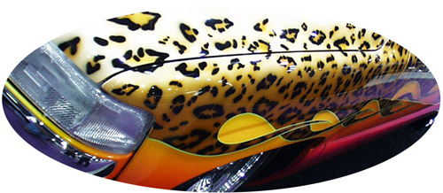 Front Fender Detail